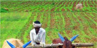 Farmers await compensation for sugarcane ChiniMandi